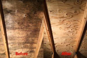 attic mold removal services in Ottawa, Ontario