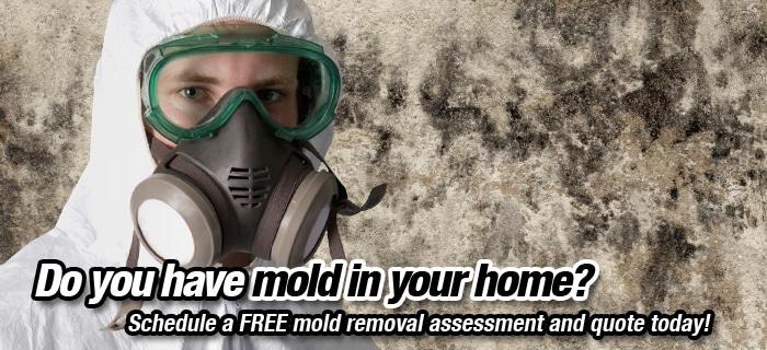 Kanata Mold Removal Services