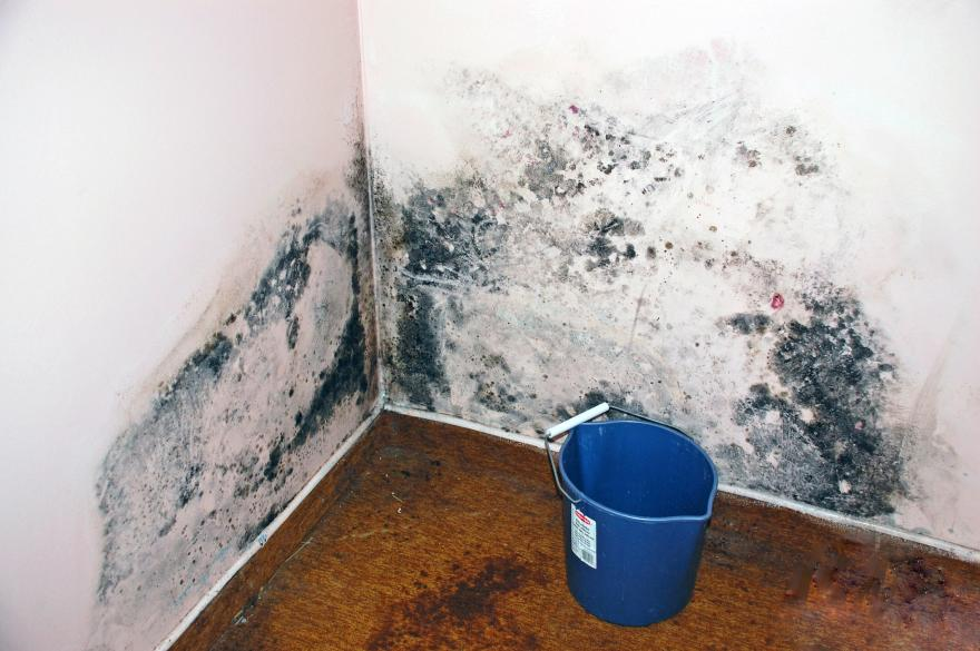 level 2 mold Ottawa