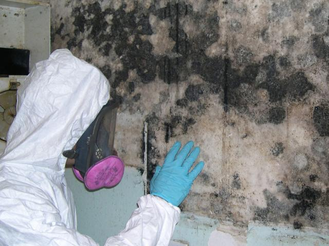 How To Interpret Lab Results From Mold Sampling Mold