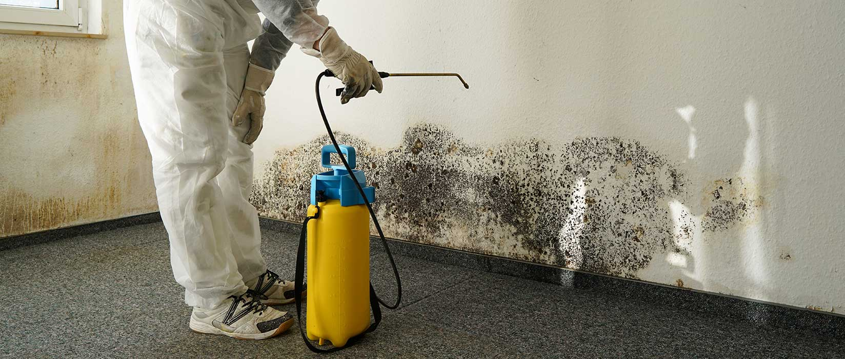 Home Page - Mold Removal Ottawa